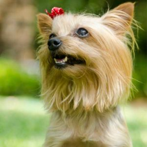 How To Get A Picky Dog To Eat A Raw Diet