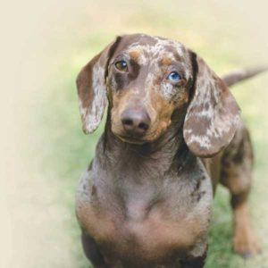 Dog Kidney Health