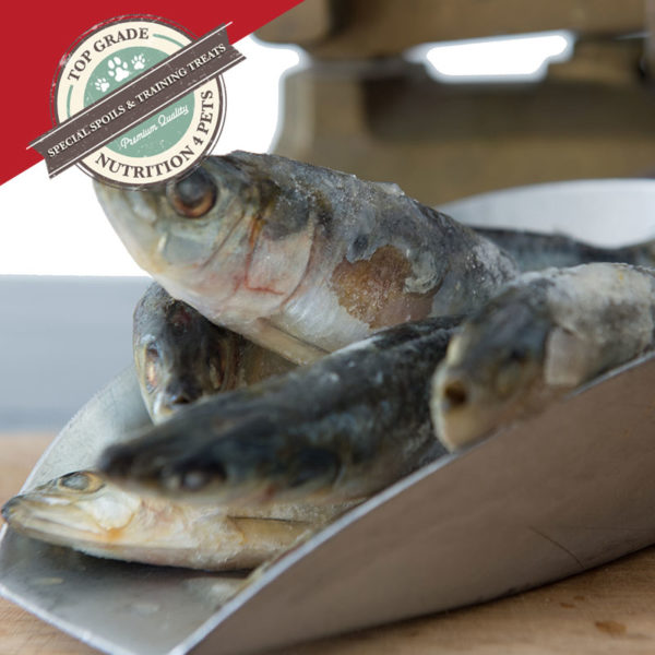 Special Treats - Sardines for Dogs & Cats