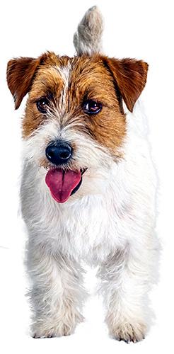 Pawsome Raw - Raw Dog Food Specialist, Raw Pet Food