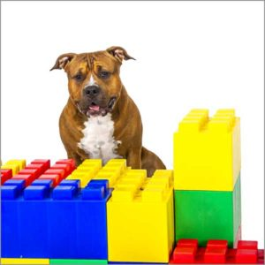 Why is Omega 3 Important in your Pet's Diet