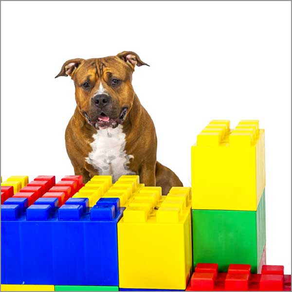 You are currently viewing Why is Omega 3 Important in your Pet's Diet