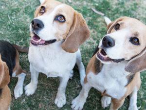 Give your dog a Pawsome Bone